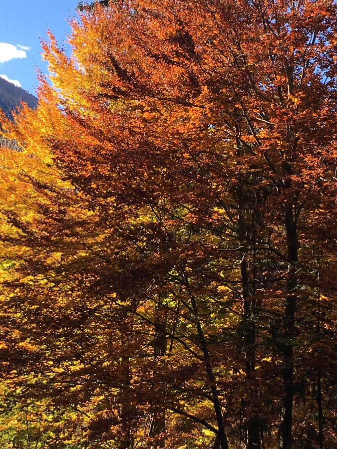 villa-sonnata-13-herfstkleuren