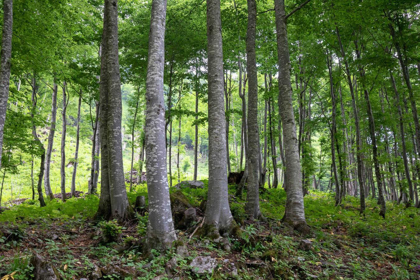 villa-sonnata-omgeving-bos,-bos,-bos