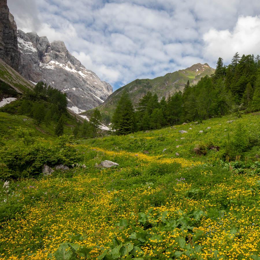 villa-sonnata-omgeving-flora-om-in-te-wandelen